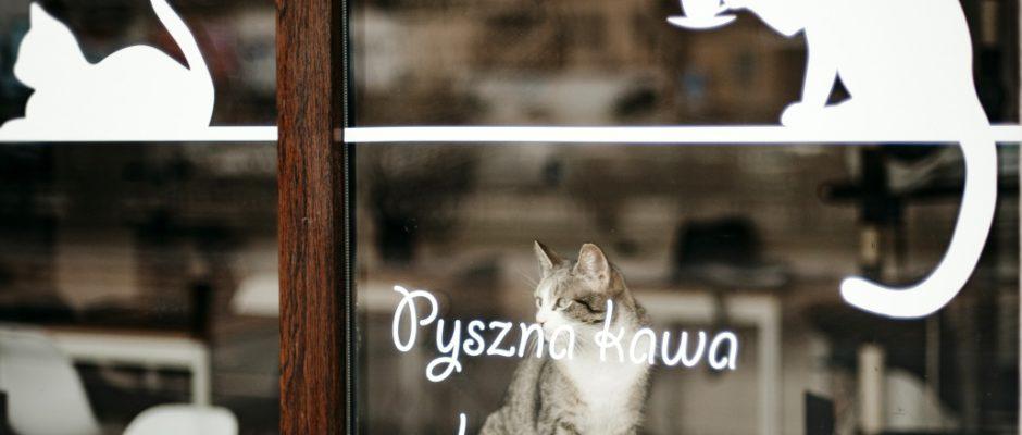 fot. Agnieszka Gurgul, Kot Cafe