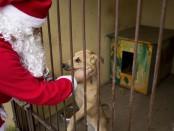 Zostań Świętym Mikołajem i podaruj coś schronisku