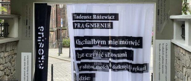Różewicz w Zaułku Solnym (fot. kaj)